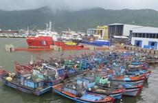 Provincia central de Quang Ngai establece reserva marina