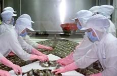 Exportación de camarones vietnamitas muestra señales positivas este año