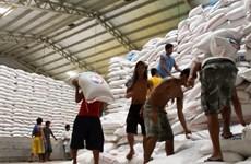 Exportación de arroz vietnamita muestra señales positivas a principios de año