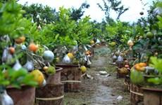 Hortelano vietnamita crea árbol con diez diferentes tipos de frutas