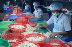 Exportaciones vietnamitas de anacardo crecen en enero