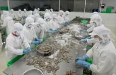 Pronostican alentadoras perspectivas para envío de camarón a EE.UU. en 2016