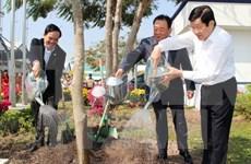 Presidente vietnamita llama a impulsar la plantación de árboles