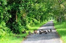 La bella de la naturaleza en el Parque nacional de U Minh Thuong