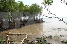 Inversión millonaria para enfrentar erosión del mar en Binh Thuan