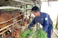 Vietnam aumenta exportación de productos pecuarios y piensos