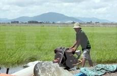 Sufre Tra Vinh escasez de agua por salinización y calor