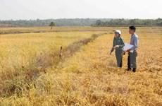 Diseña Vietnam esquema para enfrentar el cambio climático