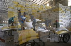 Arroz vietnamita por penetrar al mercado francés