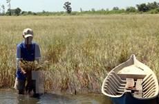Sugerencias de solución para salinización en delta de Mekong