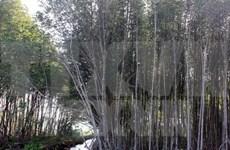 Asistencia japonesa a provincia vietnamita en desarrollo forestal sostenible