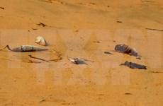 Exigen aclarar causa de muerte masiva de peces en litoral central de Vietnam