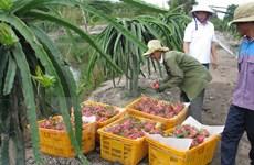 Organizan foro de promoción de inversión en agricultura Vietnam-Japón