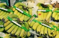 Plátanos vietnamitas son preferidos en mercado de Japón