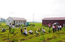 Plantan miles de árboles para un Vietnam más verde