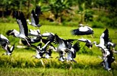 Ave en riesgo de extinción aparece nuevamente en Vietnam