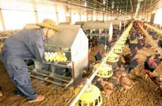 Reconocen contribuciones de ONUDI a desarrollo agrícola en Vietnam