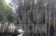 Inversión para desarrollo forestal en Vietnam