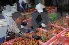 Incrementa Vietnam exportaciones de lichis a Australia