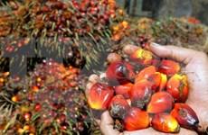 Superávit comercial de Indonesia aumenta en 2,4 veces