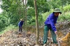 Promueven operaciones de empresas caucheras vietnamitas en Camboya