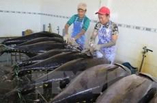 Ligero aumento en exportación vietnamita de atún