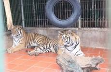 Liberan a animales exóticos a su hábitat natural en parque Phong Nha- Ke Bang