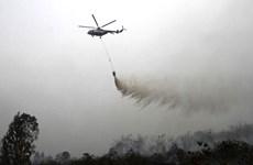 Aumentan incendios forestales en Indonesia