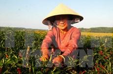 Reitera Vietnam objetivo de modernización rural