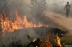 Indonesia declara estado de emergencia por incendios forestales