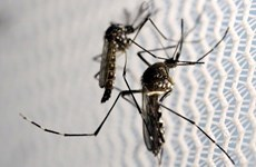Malasia instala trampas solares de mosquitos para prevenir el Zika