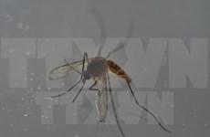 Tailandia, Singapur y Filipinas confirman nuevos casos de Zika