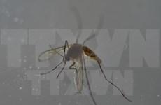Confirma Filipinas tres nuevos casos de Zika