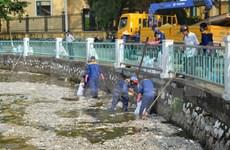 Exhortan a clarificar causa de muerte masiva de peces en lago de Hanoi