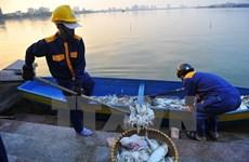 Policía y científicos participan en investigación de muerte masiva de peces en Hanoi