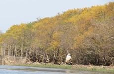 El otoño dorado en Ru Cha