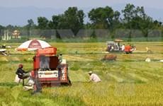 Genes, clave para producción arrocera de Vietnam ante cambio climático