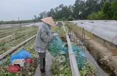 Honran en Vietnam a cooperativas y agricultores destacados en 2016
