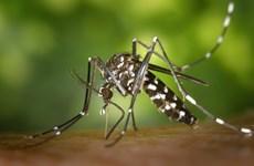 Filipinas detecta diez nuevos casos de infección de Zika