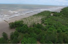 Provincia de Vietnam intensifica protección forestal