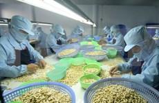 Vietnam prevé lograr nuevo récord en exportación de anacardo