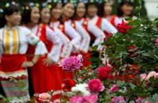 [Fotos] Colorido festival de la rosa de Bulgaria en Hanoi