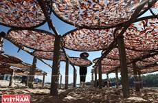 [Foto] Aldea de procesamiento de mariscos de Sa Huynh