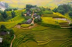 (Televisión) Atractivo ecoturismo en distrito montañoso de Sapa en Vietnam