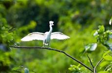 Provincia vietnamita fortalece conservación de naturaleza y preservación de biodiversidad