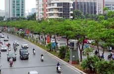 Plantarán en Vietnam mil millones de árboles en etapa 2021- 2025