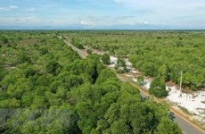 Aprueban estrategia de desarrollo forestal en Vietnam para etapa 2021-2030