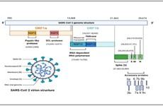Vietnam logra secuenciar el genoma del SARS-CoV-2
