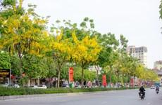 Cañas fístulas florecen bajo el cielo de Hanoi