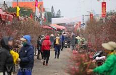 Caminando por el mercado de flores más grande de Hanoi en vísperas del Año Nuevo Lunar 2021
